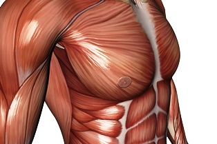 muscle_tissue