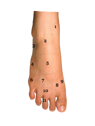 Foot Condition By Area Top Of Foot Foot Pain Diagram Sol Foot