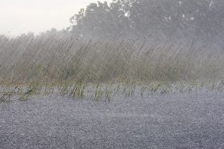 Heavy Rain Falling Into a Flooded Field