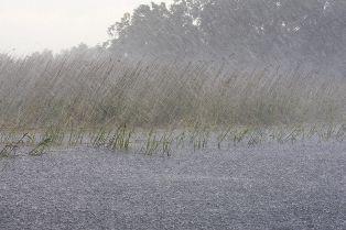 Heavy Rain Falling Into a Flooded Field