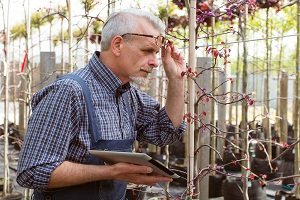 Gardener inspects plants damage after a wind storm
