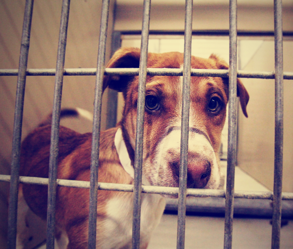 Sad dog in cage